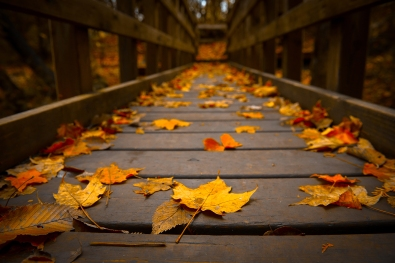 fall-leaves-hd-wallpaper-widescreen-henxr2